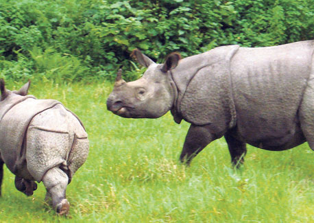 Nepal's first wildlife hospital waiting equipment for operation