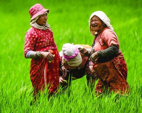 Farmers to entrepreneurs