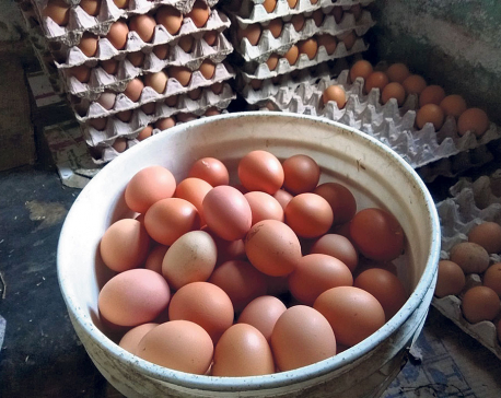 Eggs selling below cost of production, farmers say