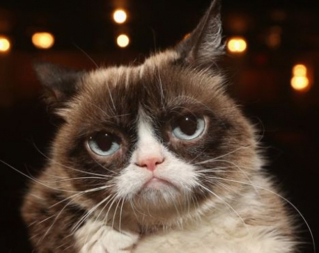 Grumpy Cat internet legend dies