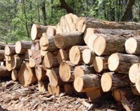 TCN distributes 90,000 cubic feet timber for house reconstruction