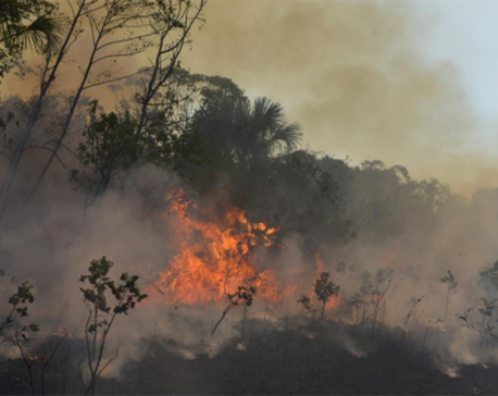 Brazil deforestation rises in August, adding to Amazon fire worries