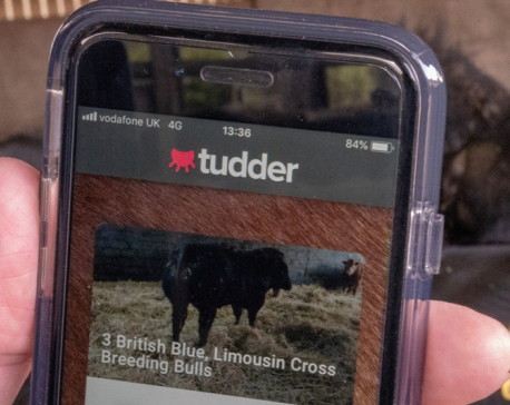 'Tinder for cows' matches livestock in the mood for love
