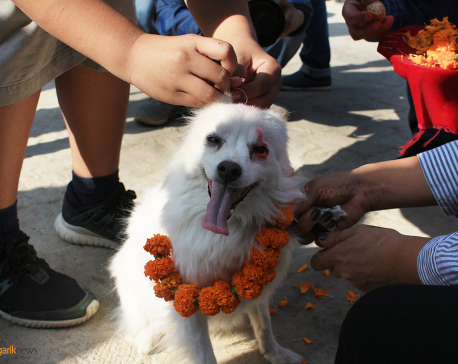 Kukur Tihar being observed (Photo Feature)