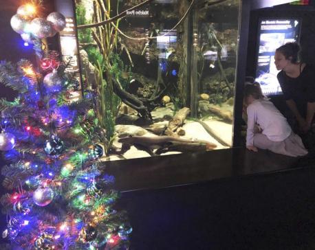 Shocked? Electric eel powers aquarium's Christmas lights