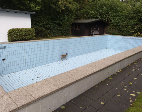 Germany: Hunter helps free deer from swimming pool