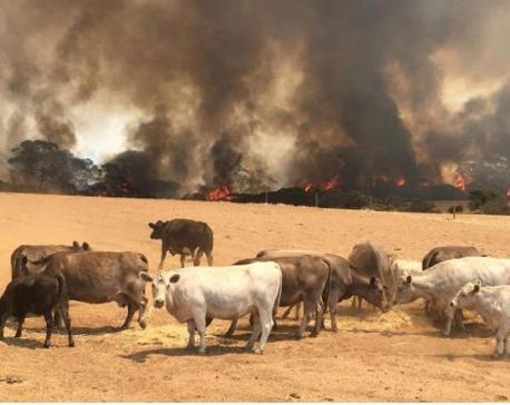 'Get out': Australians flee again as heat and wind fan huge bushfires