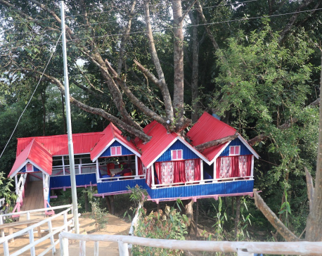 Tree houses become a new tourism trend in Province 1
