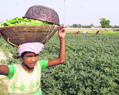 Vegetable production up in Parsa