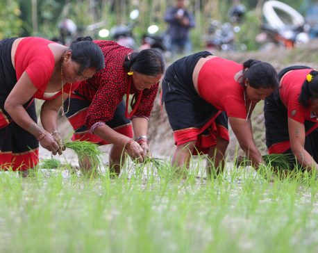 Restructuring agriculture