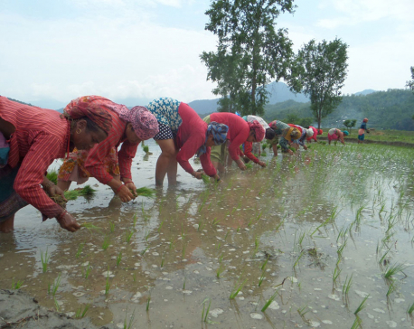 Bachelor classes in agriculture in Chitwan after seven years