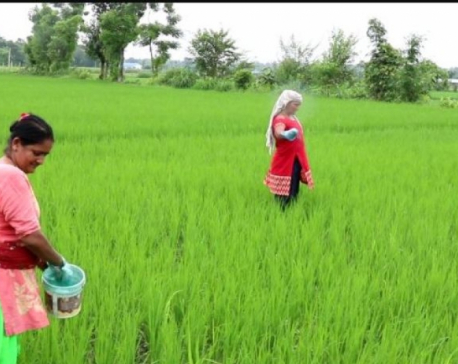 Nepal's agriculture lost more than 12 billion rupees during pandemic