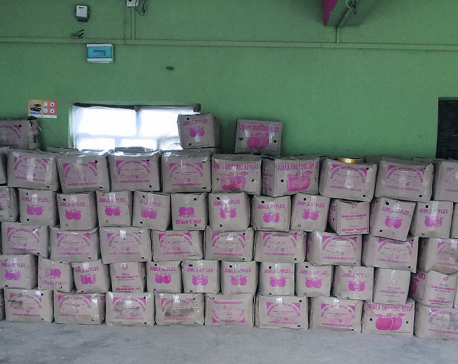 300 tons of Chinese apples entering Nepal every day for Tihar