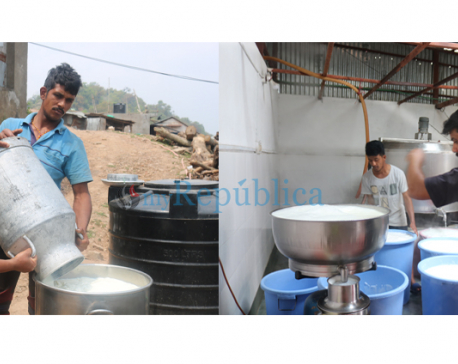 Dairy farmers hard-hit by lockdown in Arghakhanchi