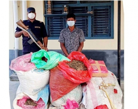 Man held with 131 kg cannabis in Parsa