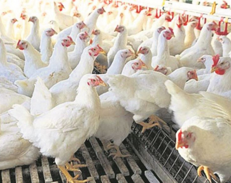 Chicken price rises to Rs 360 per kg