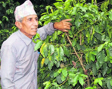 Coffee production below par, despite high market potential