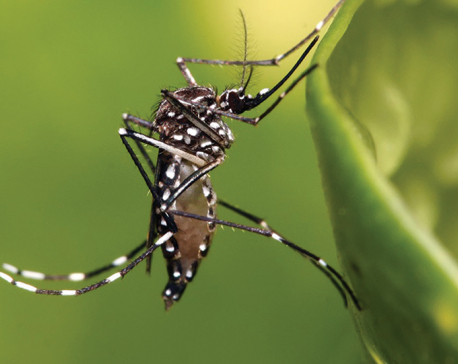 Dengue spreads to all but one district of Gandaki province