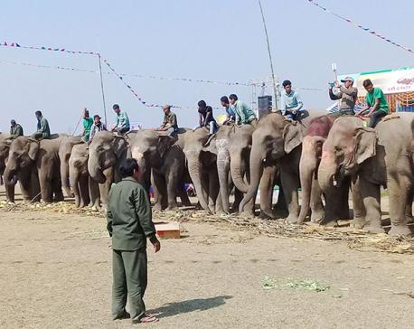 Food feast for elephants