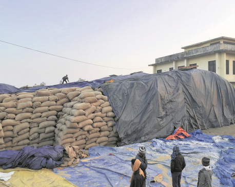 Government to buy 5,000 quintals more paddy in Nepalgunj