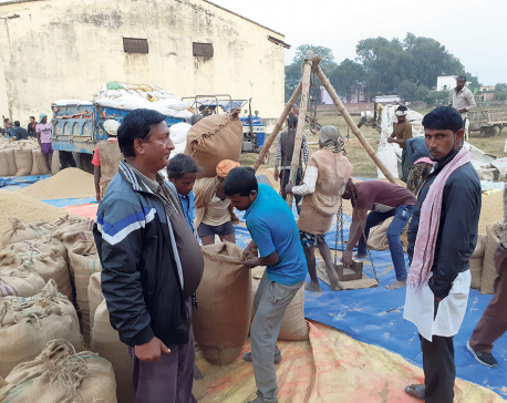 FMTC planning to purchase 35,000 quintals of paddy