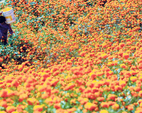 88% flowers for Tihar to be sourced from domestic production