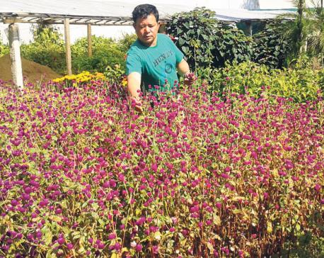 Despite growth potential, floristry remains unpopular