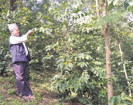 Palpa coffee farmers demand government support for boosting growth