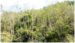 Forest key to country's prosperity