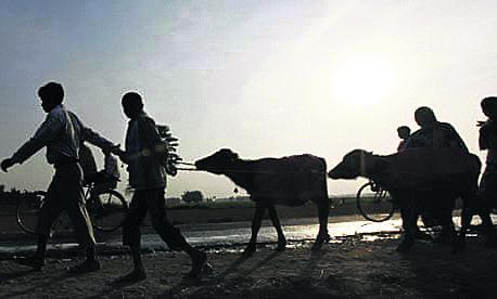 Contempt of court case against govt, Gadhimai Trust for animal sacrifice