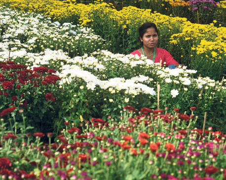 13th Godavari Flower Expo kicks off