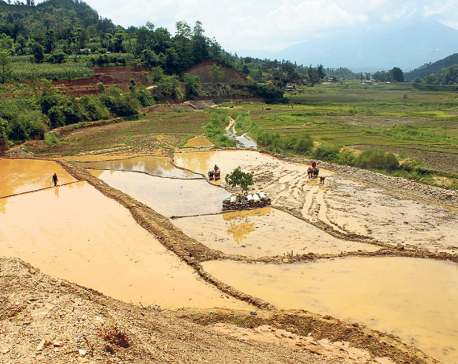 Gorkha farmers relieved as irrigation canals start flowing again