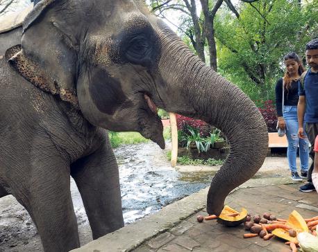 Bearing witness to animals in captivity