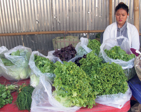 Organic New Year in Dharan