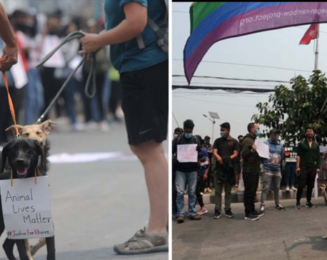 IN PICS: Animal activists protest at capital's Maitighar against brutal dog killing