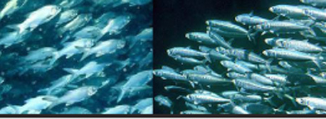 Infographics: World leaders tackle declining fish stocks