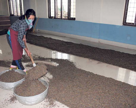Indian customs officials obstruct export of Nepali organic tea
