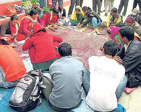 Jumla beans, buckwheat lie unsold in NFC warehouse