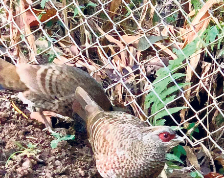 Wildlife conservation park draws tourists to Kalika Temple