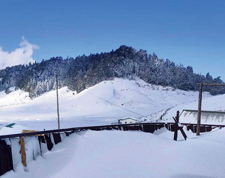 Heavy snowfall in Khaptad, wildlife at risk