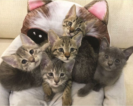 Giving newly-born kittens a home