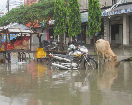 Incessant rainfall inundates Lahan