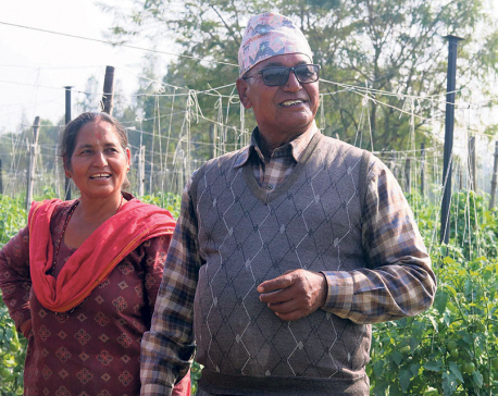 There is no loss in agriculture, says a Banke farmer