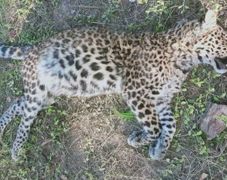 Family of girl killed in leopard attack given compensation