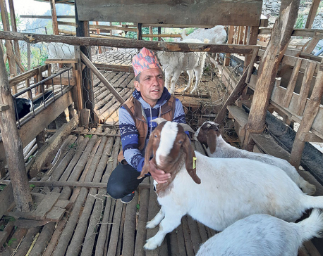 Myagdi goat farmer earning Rs 2 million annually