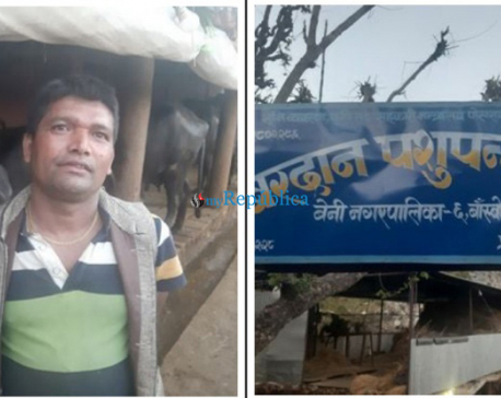 Myagdi dairy farmers hit hard by lockdown