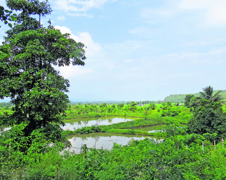 NOC land in Chitwan at big risk of inundation: Experts