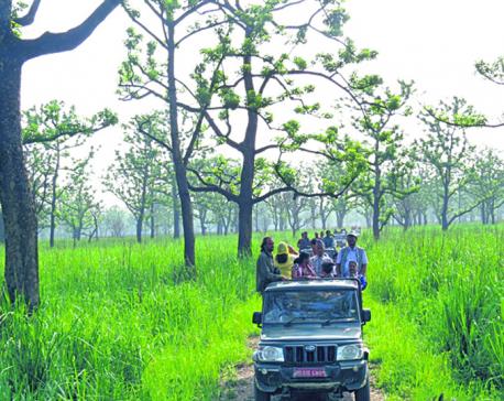 Jungle safari open at Banke national park
