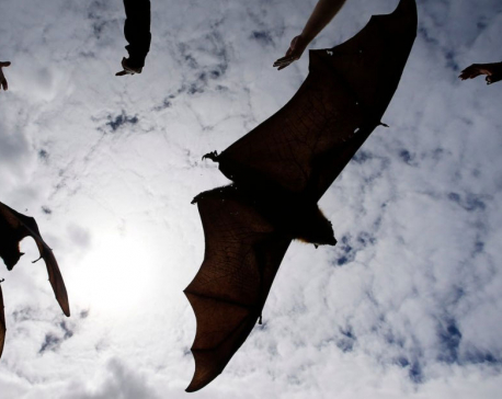 Bat-borne Nipah virus outbreak kills nine in India