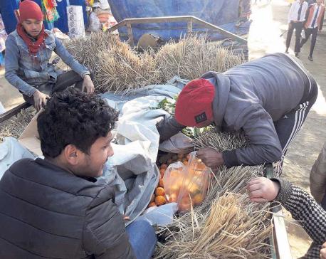 Orange production plummets by 20 percent in Khotang